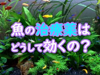 魚の治療薬はどうして効くの?治療薬ごとの有効成分・効果の違いまとめ!