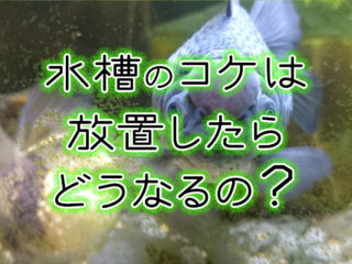 水槽のコケを放置したらどうなるの?コケの一生と水槽掃除の必要性を解説