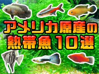 アメリカ原産の熱帯魚10選!水槽飼育におすすめな魚種や生き物をご紹介!