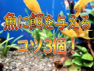 魚に餌を与えるコツ3個!飼育水を汚さない給餌方法を餌のタイプ別に解説