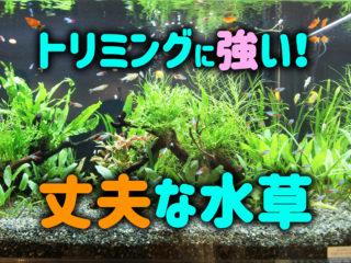トリミングに強い水草7選!水草水槽を美しく維持しやすい丈夫な水草とは!