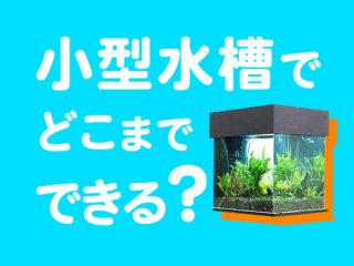 小型水槽でどこまでできる?小型水槽で楽しめるアクアリウムの種類をご紹介
