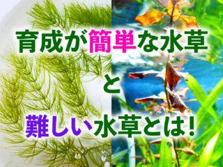 【覚えると得】育成が簡単な水草と難しい水草の違い!やさしく解説します