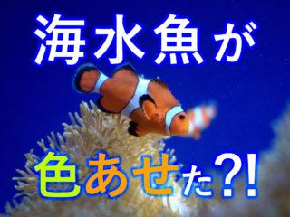 海水魚の体色が褪せてきた!?原因と対処法を解説!比重と照明が大切です