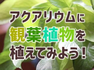 アクアリウムに観葉植物を植えてみよう!コケが減る?種類の選び方・使い方