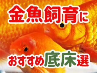 【金魚飼育におすすめの底床10選!】飼育目的に合わせた底床をご紹介