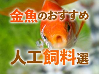 金魚のおすすめ人工飼料8選!消化・与えやすさからタイプ別に解説です!