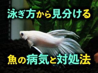 泳ぎ方から見分ける魚の病気と対処法!ふらふら・擦り付けるなどは要注意