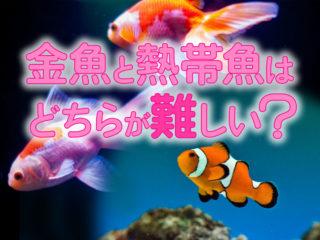 金魚と熱帯魚はどちらの飼育が難しい?それぞれのメリット・デメリット