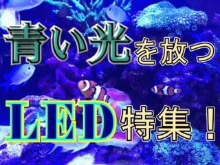 青い光を放つLED特集!水槽を青く神秘的に照らす水槽照明をご紹介