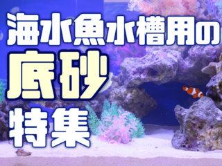 海水魚水槽用の底砂特集!マリンアクアリウムにおすすめな底砂6選です!