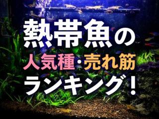 熱帯魚ランキング10!人気種から売れ筋までおすすめな熱帯魚をご紹介!