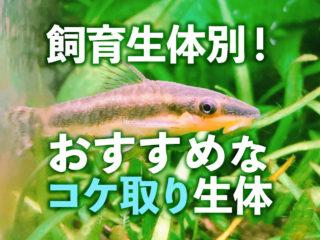 飼育生体別!おすすめコケ取り生体5選と注意点!小型魚・大型魚・エビ向け