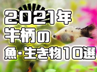 2021年!牛柄の魚・生き物10選!白黒でかわいい種類をご紹介!