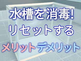 【裏技】水槽を消毒! リセットするメリット、デメリットを解説します