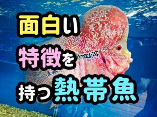 面白い特徴を持つ熱帯魚!体型・習性がユニークで自宅飼育できる種類