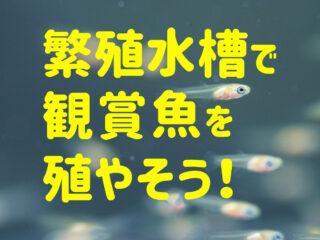繁殖水槽で観賞魚を殖やそう!熱帯魚やメダカの繁殖セット商品を紹介