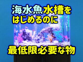 【海水魚飼育】マリンアクアリウムを最低限の設備で始める方法とは!