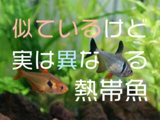 似ているけど実は異なる熱帯魚5選!そっくりでも別種の魚たちをご紹介