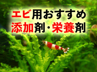 エビ用添加剤特集!育成・繁殖を促すコンディショナー・栄養剤5選!