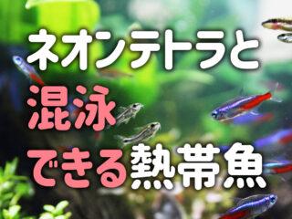 ネオンテトラと混泳できる熱帯魚10選!相性が良く最適な魚種とは