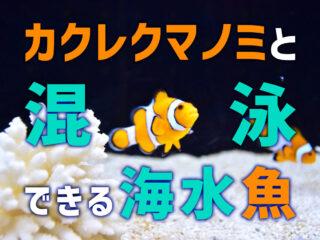 カクレクマノミと混泳できる海水魚10選!相性が良くかわいい魚種とは