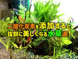 二酸化炭素を添加すると抜群に美しくなる水草10選!緑・赤色の種類